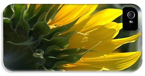 Colorful iPhone 5 Case - #sunflower #closeup by Georgia Fowler