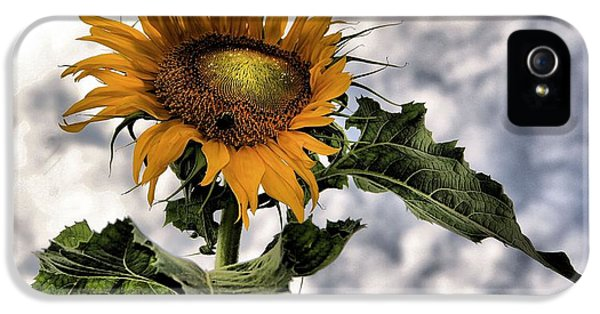 Sunflower IPhone 5 Case by Dan Sproul