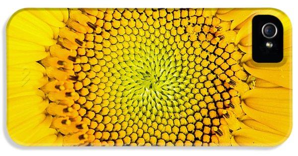 Sunflower  IPhone 5 / 5s Case by Edward Fielding