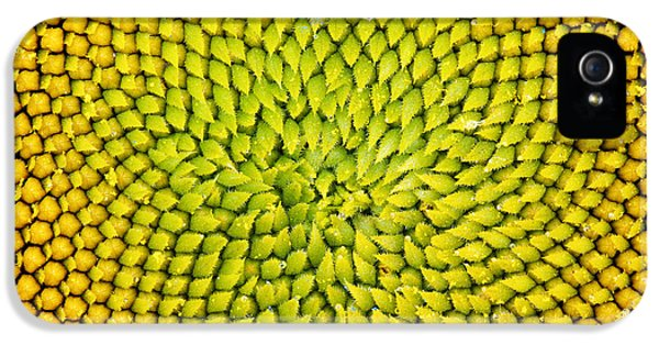 Sunflower Middle  IPhone 5 Case by Tim Gainey