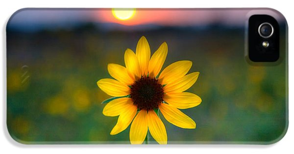 Sunflower iPhone 5 Case - Sunflower Sunset by Peter Tellone