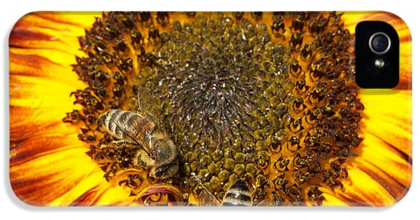Orange iPhone 5 Case - Sunflower With Bees by Matthias Hauser