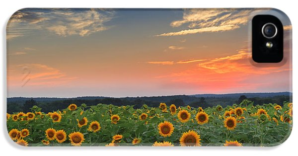 Sunflowers In The Evening IPhone 5 Case