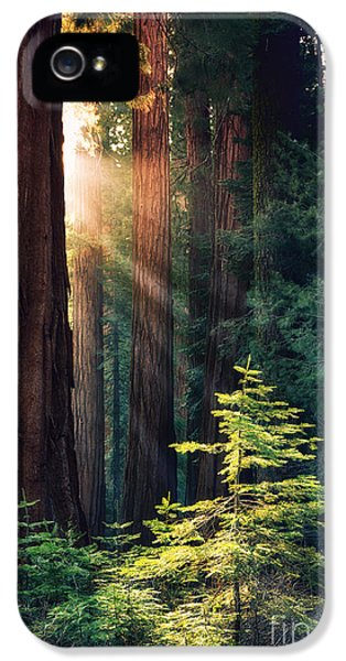 Sunlit From Heaven IPhone 5 Case by Jane Rix