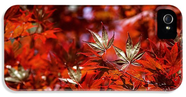 Sunlit Japanese Maple IPhone 5 Case