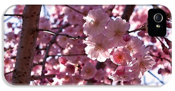 Sunlit Cherry Blossoms IPhone 5 Case