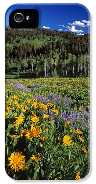 Sunny Spring Day IPhone 5 Case by Leland D Howard