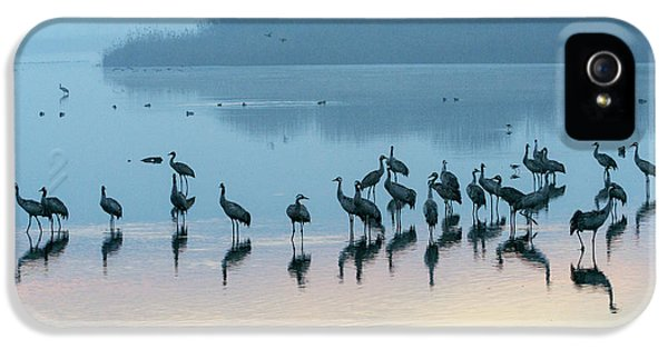 Sunrise Over The Hula Valley Israel 5 IPhone 5 Case by Dubi Roman