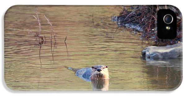 Sunrise Otter IPhone 5 Case
