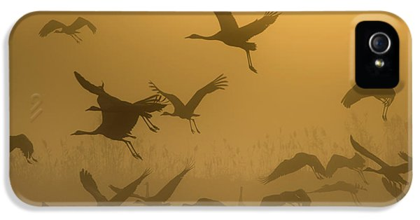 Crane iPhone 5 Case - Sunrise With Cranes by Ronen Rosenblatt