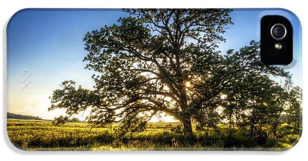 Sunset Oak IPhone 5 Case by Scott Norris