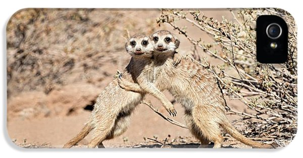 Suricates At Play IPhone 5 Case by Tony Camacho
