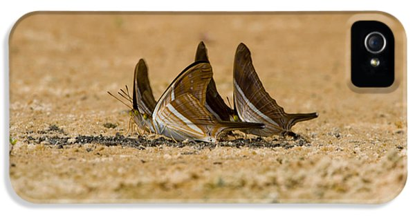 Swallowtail Butterflies In A Field IPhone 5 Case by Panoramic Images
