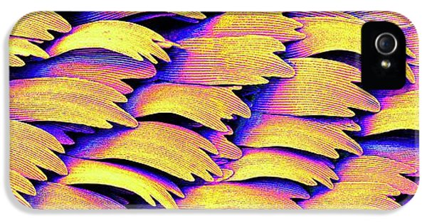 Swallowtail Butterfly Wing Scales IPhone 5 Case by Susumu Nishinaga
