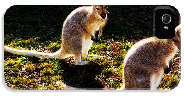 Red-necked Wallabies IPhone 5 Case