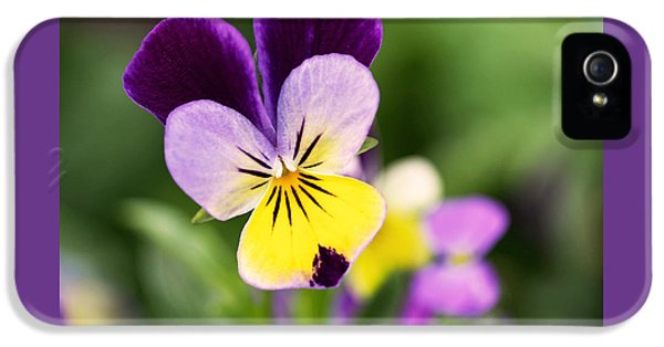 Sweet Violet IPhone 5 / 5s Case by Rona Black