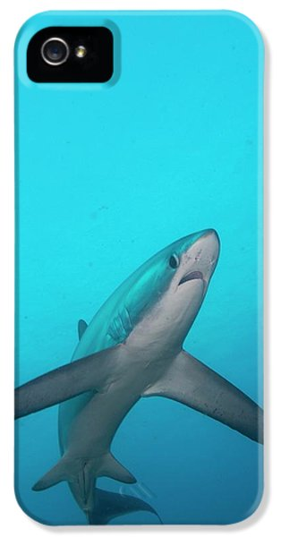 Swimming Thresher Shark IPhone 5 Case by Scubazoo