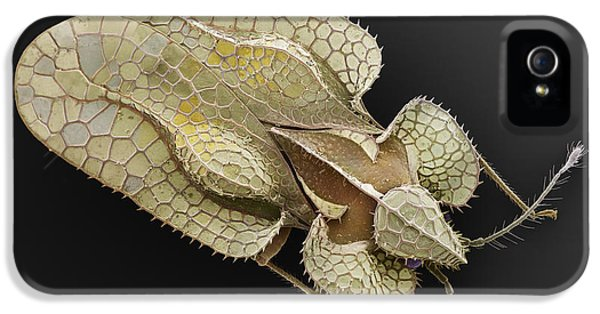 Sycamore Lace Bug Sem IPhone 5 Case