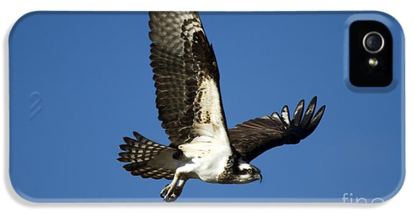 Osprey iPhone 5 Case - Take Flight by Mike  Dawson