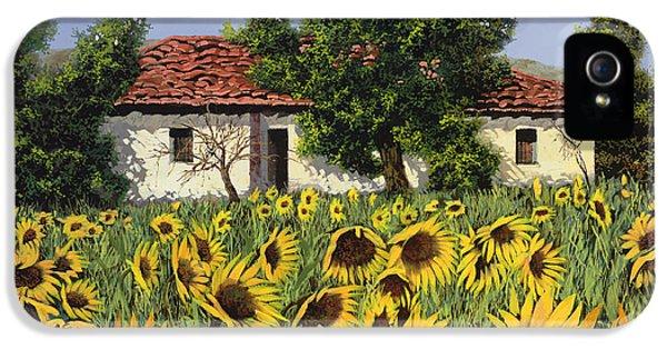 Sunflower iPhone 5 Case - Tanti Girasoli Davanti by Guido Borelli