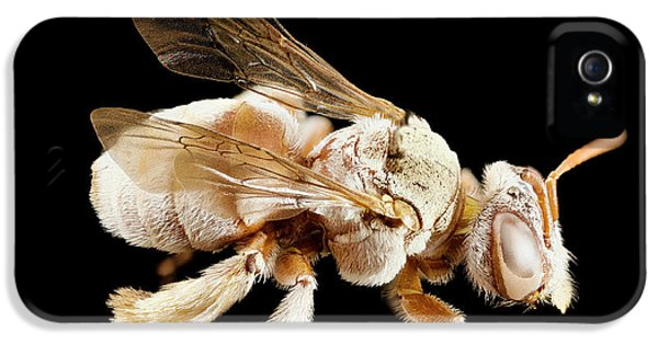 Tarsalia Bee IPhone 5 Case by Us Geological Survey