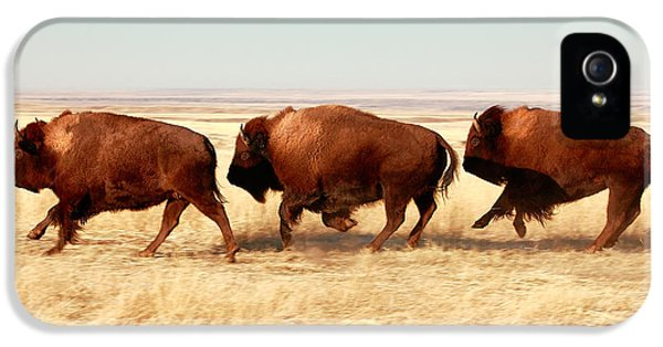 Tatanka IPhone 5 Case by Todd Klassy