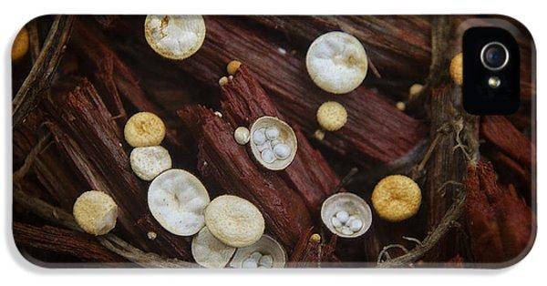 Teeny Tiny Mushrooms IPhone 5 Case by Mary Machare