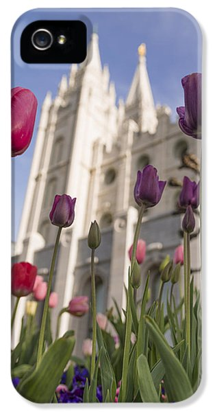 Tulip iPhone 5 Case - Temple Tulips by Chad Dutson