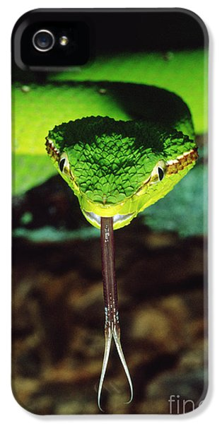 Temple Viper IPhone 5 Case by Gregory G. Dimijian