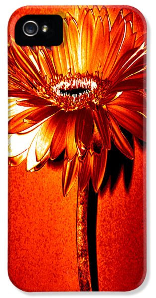 Tequila Sunrise Zinnia IPhone 5 Case by Sherry Allen