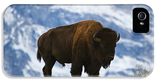 Teton Bison IPhone 5 / 5s Case by Mark Kiver