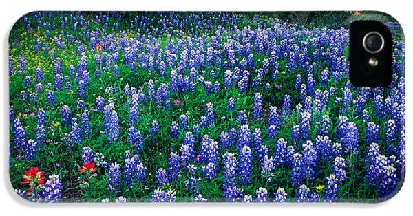 Texas Bluebonnet Field IPhone 5 Case by Inge Johnsson
