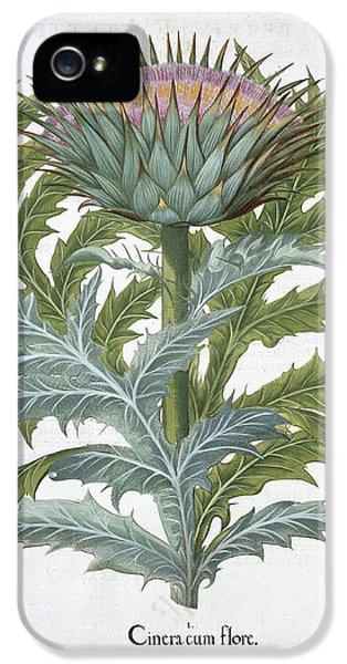 The Cardoon, From The Hortus IPhone 5 Case by German School