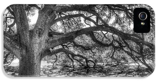The Century Oak IPhone 5 / 5s Case by Scott Norris