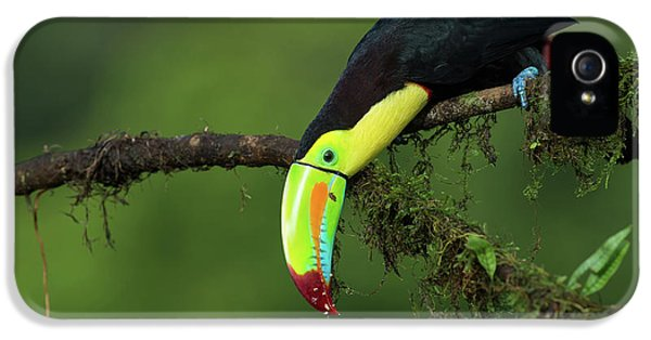 Toucan iPhone 5 Case - The Colors Of Costa Rica by Fabio Ferretto