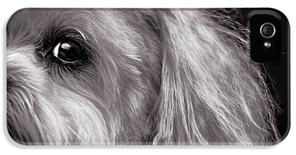 The Dog Next Door IPhone 5 Case by Bob Orsillo