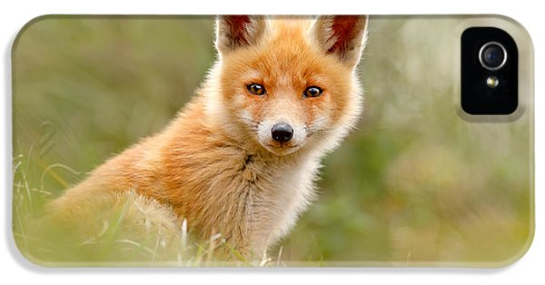 The Face Of Innocence _ Red Fox Kit IPhone 5 Case