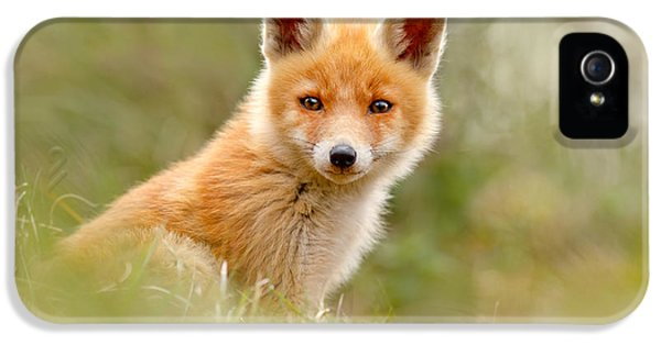 The Face Of Innocence _ Red Fox Kit IPhone 5 Case by Roeselien Raimond