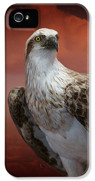 iPhone 5 Case - The Glory Of An Eagle by Holly Kempe