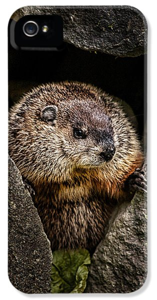 The Groundhog IPhone 5 Case