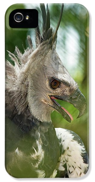 Harpy Eagle iPhone 5 Case - The Harpy Eagle (harpia Harpyja by Andres Morya Hinojosa