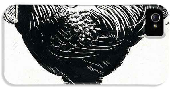 Rooster iPhone 5 Case - The Hen by George Adamson
