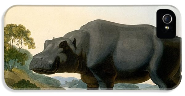 The Hippopotamus, 1804 IPhone 5 Case by Samuel Daniell