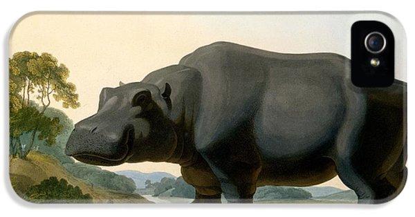 The Hippopotamus, 1804 IPhone 5 Case by Samuel Daniell