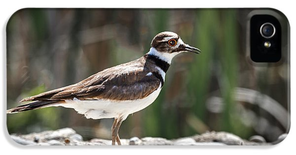 Killdeer iPhone 5 Case - The Killdeer by Robert Bales