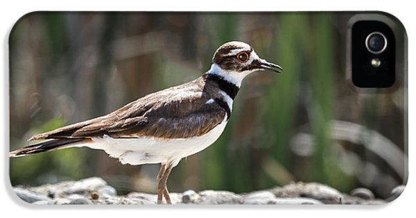 The Killdeer IPhone 5 Case by Robert Bales