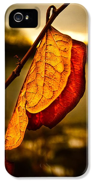 The Leaf Across The River IPhone 5 Case by Bob Orsillo