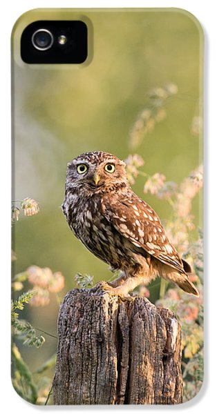 Owl iPhone 5 Case - The Little Owl by Roeselien Raimond