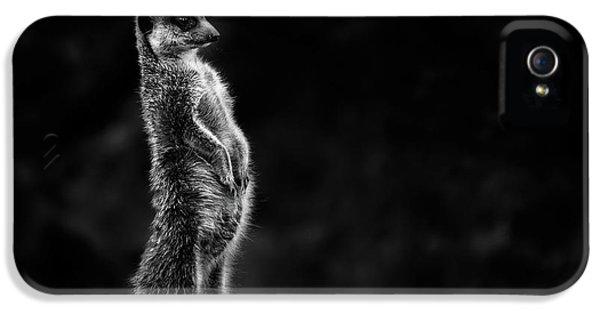 The Meerkat IPhone 5 Case