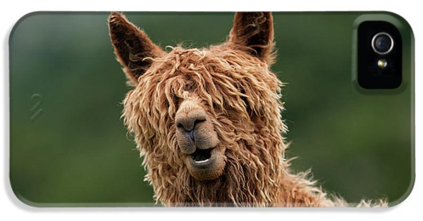 Llama iPhone 5 Case - The Muppet Show by Vladimir Driga